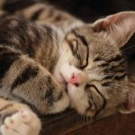 Vaccination Package for Cats