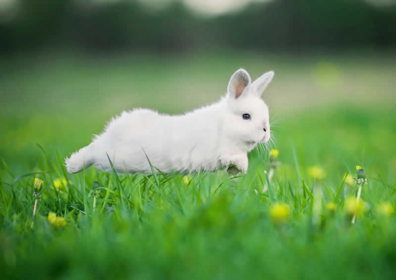 June is Rabbit Awareness Month!
