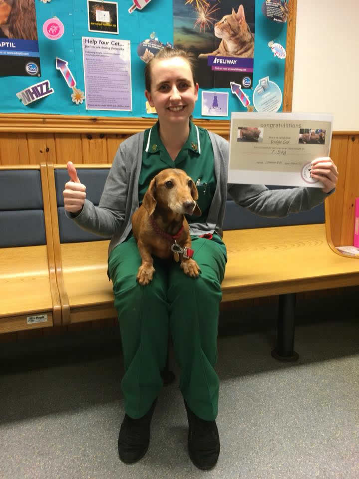 daschund at Abbey Vets