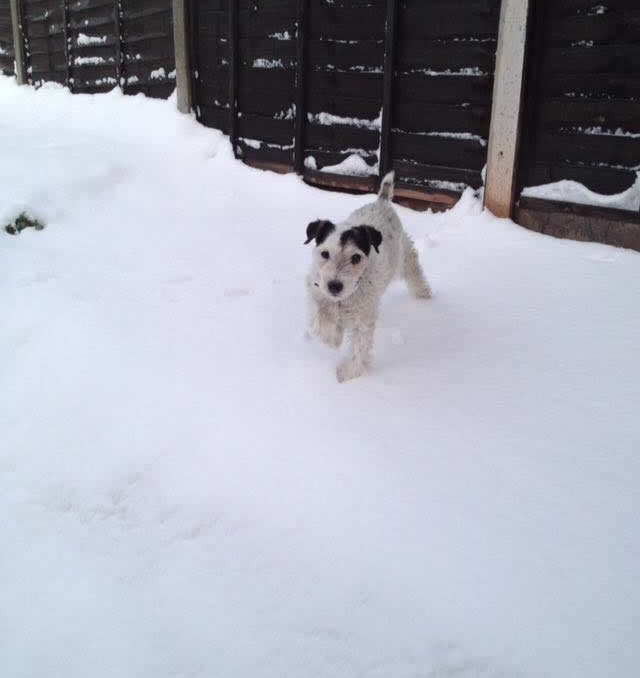 dog in snow at abbey vets