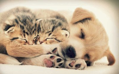 Our Puppy and Kitten Packages!