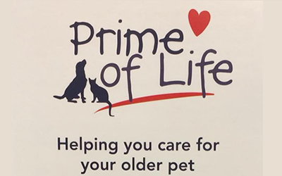 "Our new ""Prime of Life"" programme for senior pets"